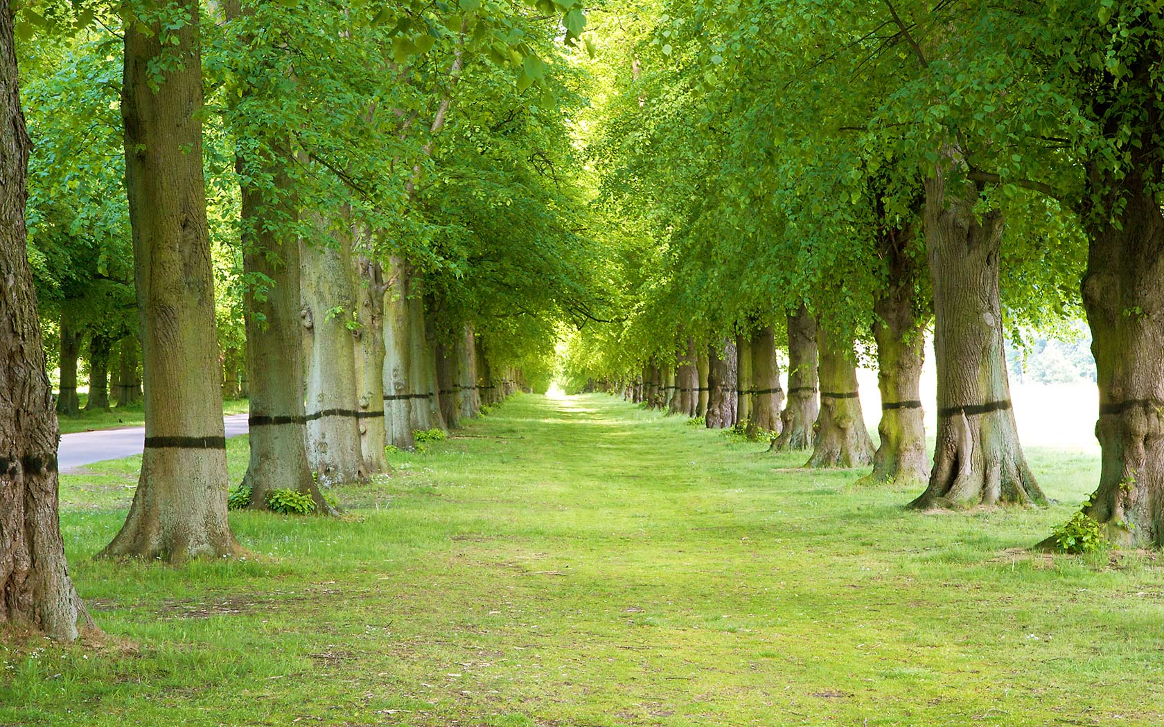 How can Trees Be Beneficial for the Environment